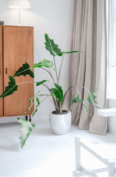 Een hint groen in een witte kamer