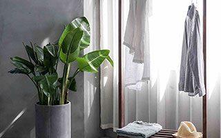 Kledingrek met een plant