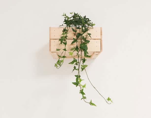 Groene hangplant op een witte muur