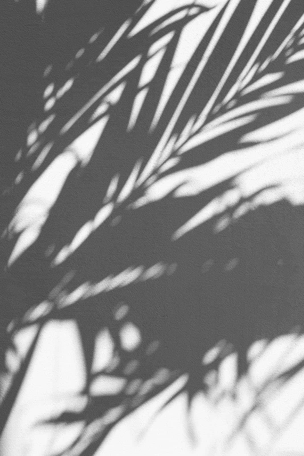 Een schaduw van palmboom bladen